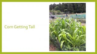 North Hampton Community Gardens